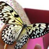 Бабочки живые.